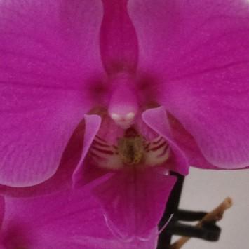 Orchid test shot