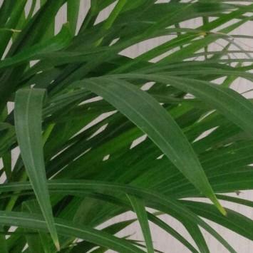 Plant test shot